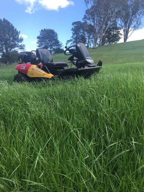 Razorback behind long grass